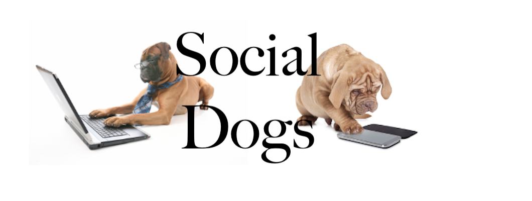 Stop Being A Social Dog